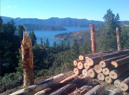 Port Underwood Logging
