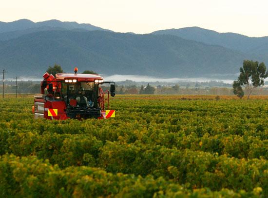 Vineyard Contracting